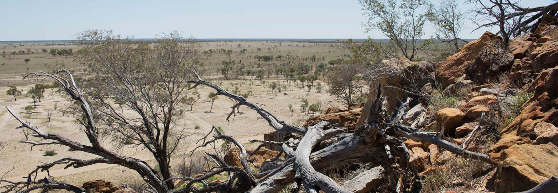 A sparce vista of the longreach region.